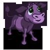 calf_purple