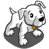 pitbull_puppy